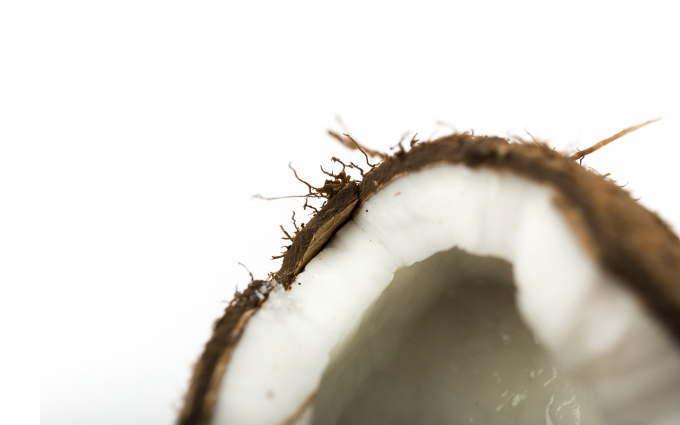 ココナッツの断面図